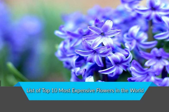 List of Top 10 Most Expensive Flowers in the World