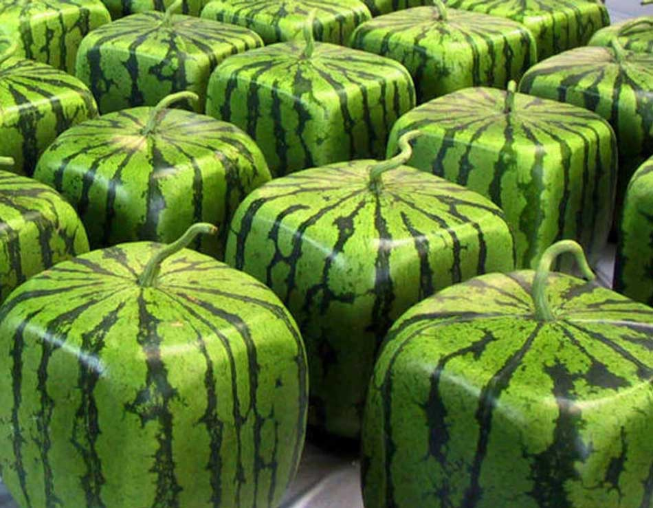 5 most expensive fruits in the world
