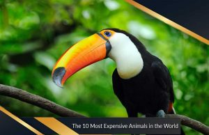 The 10 Most Expensive Animals in the World
