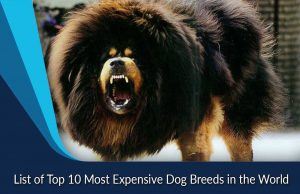 List of Top 10 Most Expensive Dog Breeds in the World