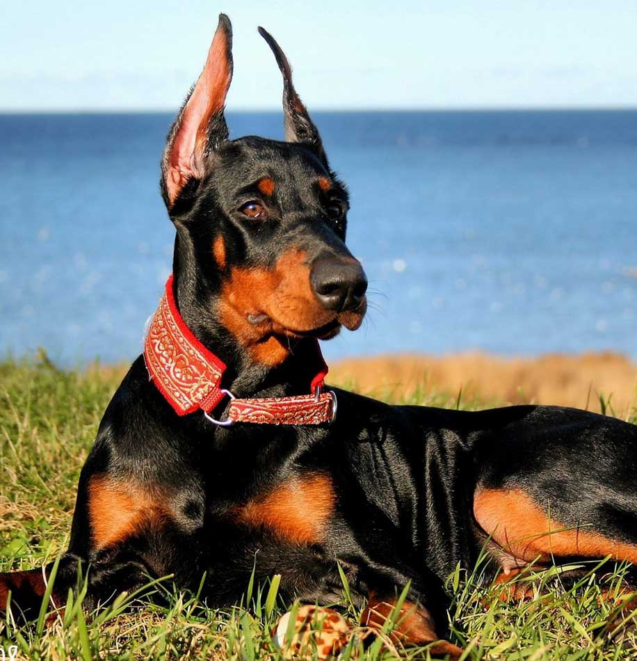 Top 5 Most Dangerous Dog Breeds in the World