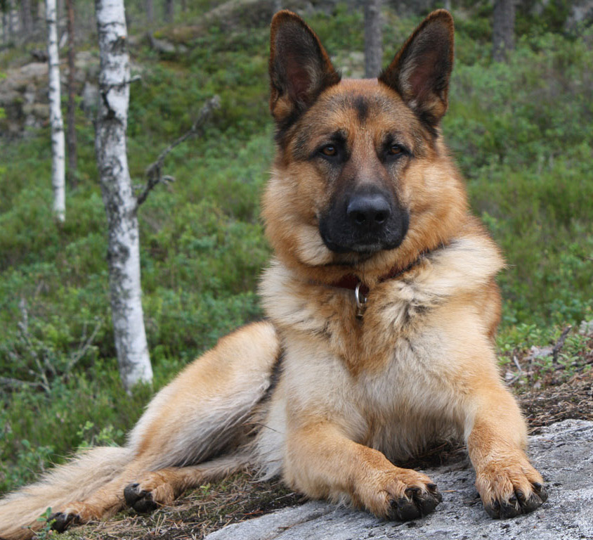 Top Three Most Dangerous Dog Breeds in the World