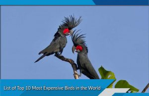 List of Top 10 Most Expensive Birds in the World