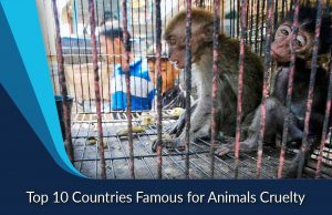 Top 10 Countries Famous for Animals Cruelty