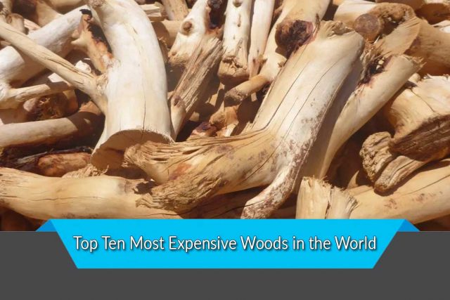 Top Ten Most Expensive Woods in the World