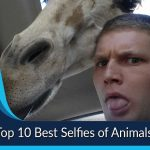Top 10 Best Selfies of Animals