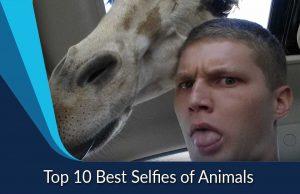 Top 10 Best Selfies of Animals