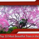 List of Top 10 Most Beautiful Trees in the World