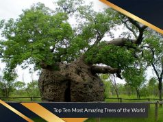 Top Ten Most Amazing Trees of the World