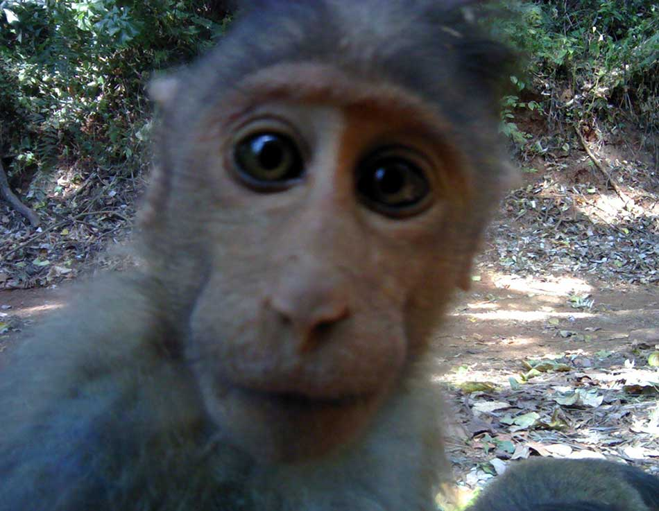 Top 5 Best Selfies of Animals