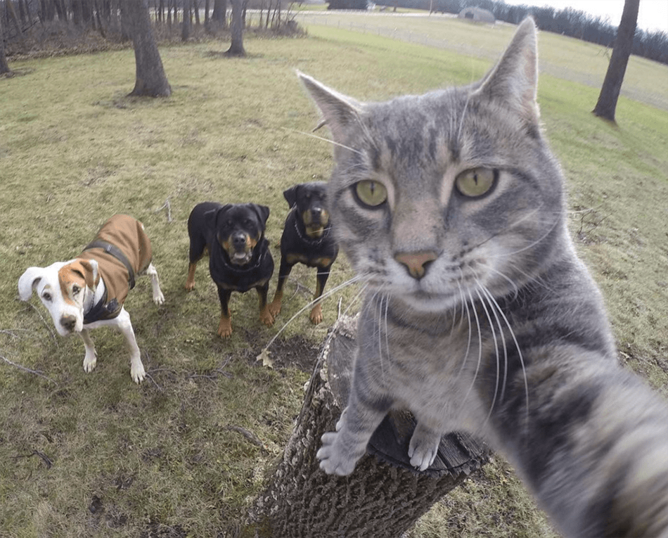 List of Top Ten Best Selfies of Animals