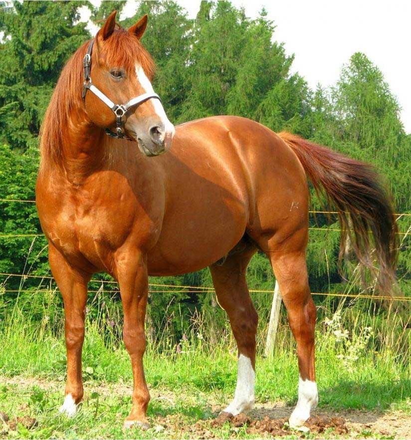 Top Three Most Expensive Horse Breeds in the World