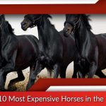 Top 10 Most Expensive Horses in the World