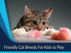 Friendly Cat Breeds For Kids to Play