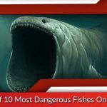List of 10 Most Dangerous Fishes On Earth