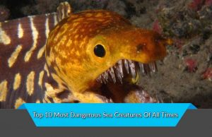 Top 10 Most Dangerous Sea Creatures Of All Times