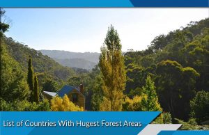 List of Countries With Hugest Forest Areas