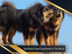 Top Rated Guard Dog Breeds In The World