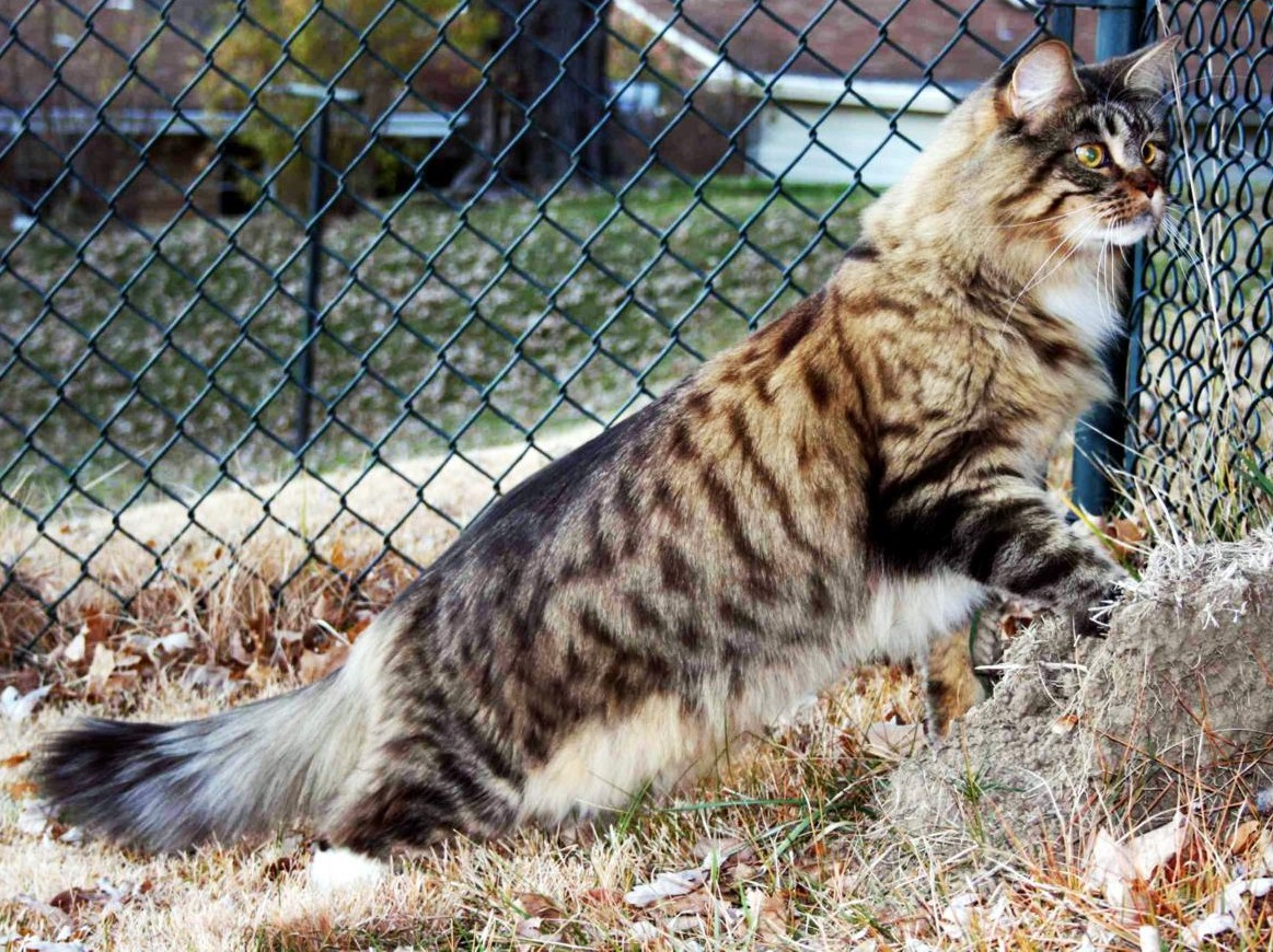 Best Cat Breeds For Kids Top Rated