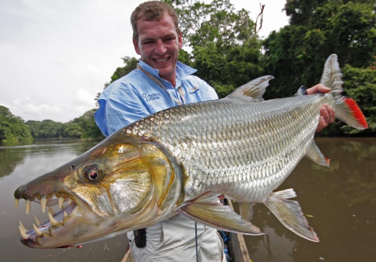 Most Dangerous Fishes
