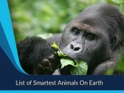 List of Smartest Animals On Earth