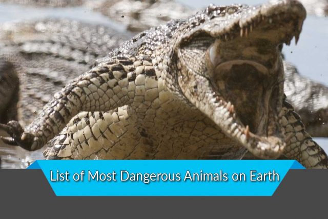 List of Most Dangerous Animals on Earth