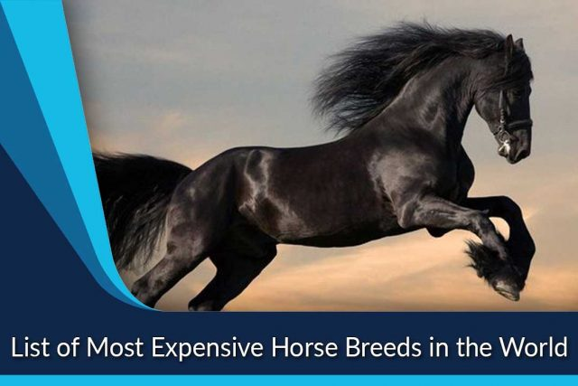 List of Most Expensive Horse Breeds in the World
